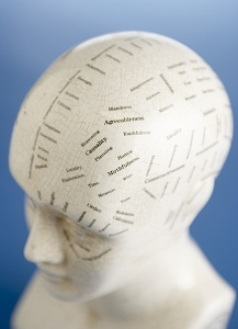 Head model with labels