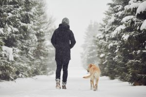 Rear view of person in winter clothes walking down snowy path lined with fir trees with golden Labrador