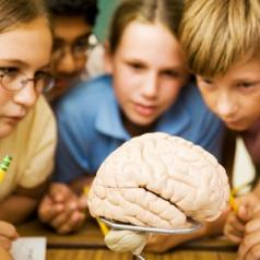A group of school kids huddle around a lab table and look at a human brain.