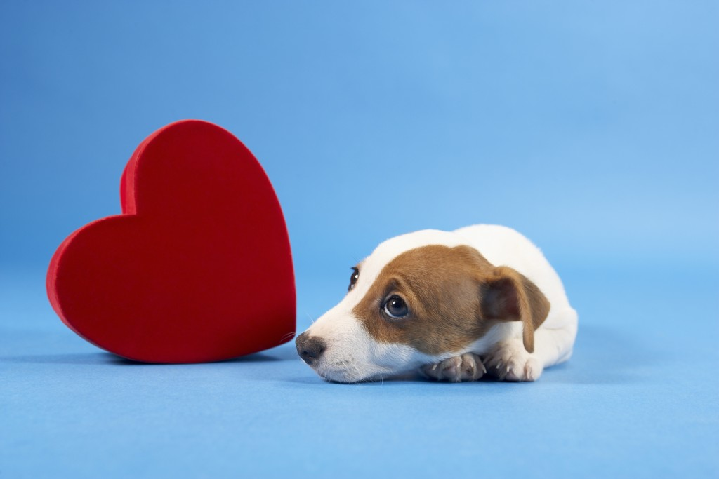 dog-with-heart