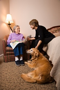 therapy-dogs-0527137