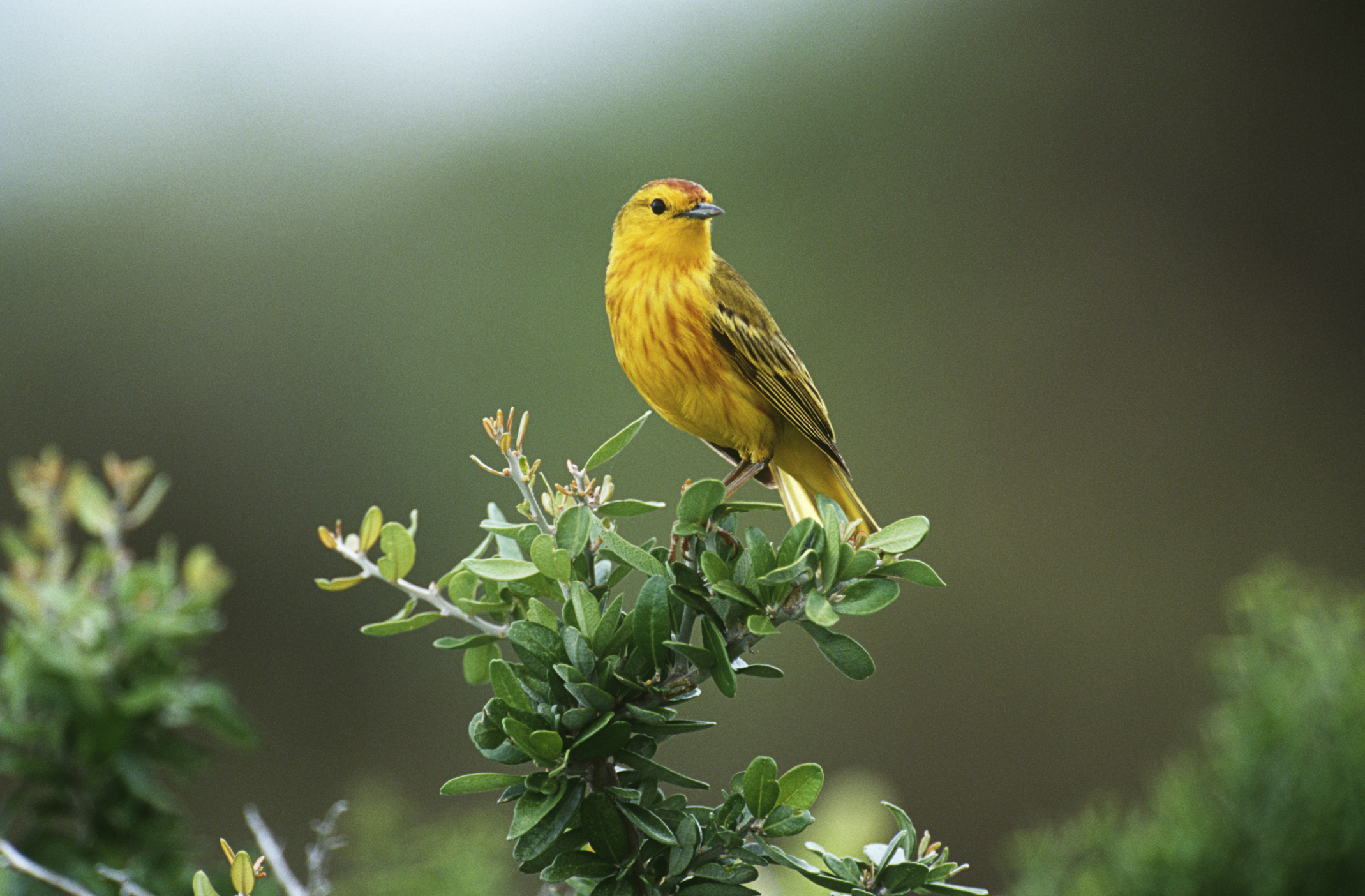 Yellow bird perched on a tree branch