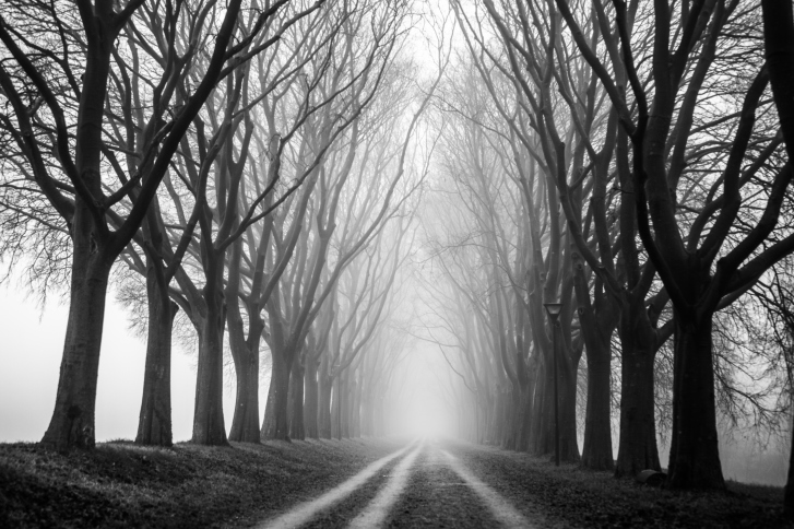 country road tree canopy in the fog