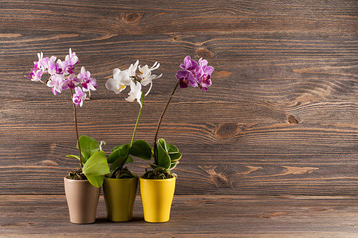 Orchid in clay pot against wooden background