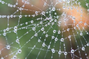 Spiderweb with dew drops clinging to it in front of a blurred bush background