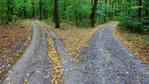 Two roads diverge in forest, one more strewn with fallen leaves
