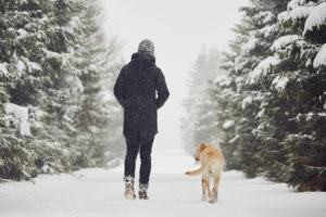 Rear view of person walking with golden retriever down snowy tree-lined road