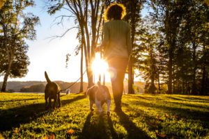 Rear view of person with long curly hair walking dogs through sunlit park