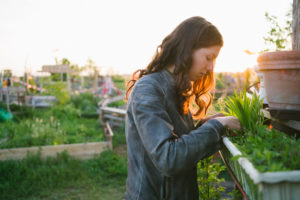 Person with long hair looks into window box and works with plants