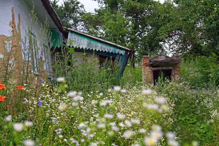 Old house surrounded by overgrown wildflowers