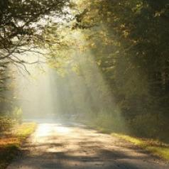 Sunlight pours through tress, drenching a forest road.