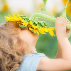 Happy child with short curly hair holds sunflower to face in field