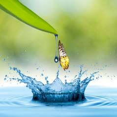 Water drop from leaf and butterfly into the water with summer scene background