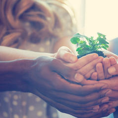 Cropped view photo of people holding seedling in cupped hands