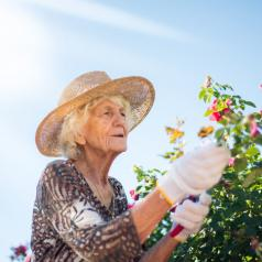 A senior woman works in her sunny garden.