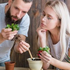 Couple looking at plant roots while putting plants into pots
